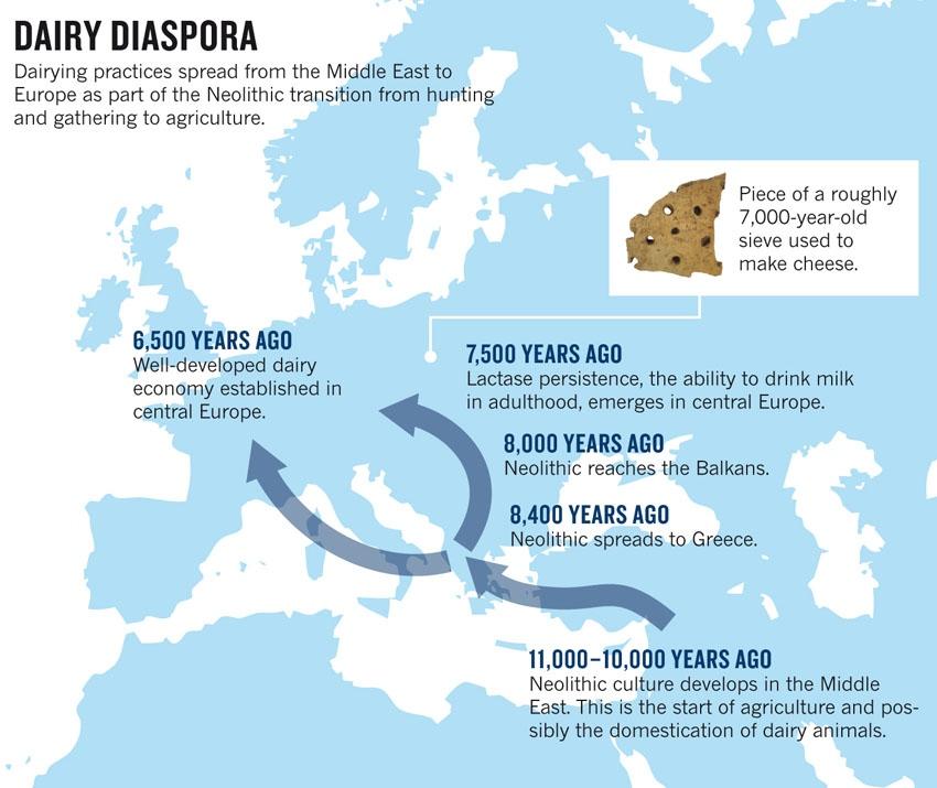dairy-diaspora2